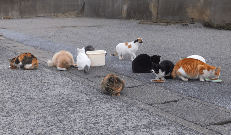 海岸に住む猫の餌やり