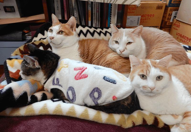 シェルターで保護している猫