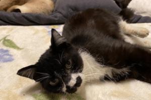 白黒猫(オス):2021022801
