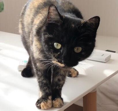 サビ猫(メス):2021022803