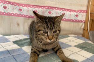 キジトラ猫(オス):2021032802