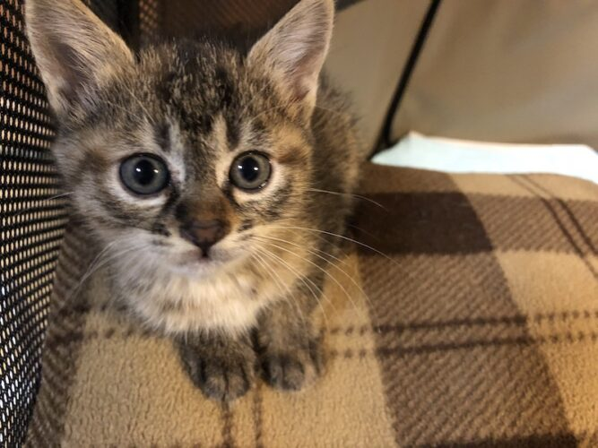 サビキジ子猫(メス):2021052802