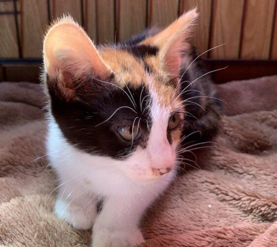 三毛子猫(メス):2021060802