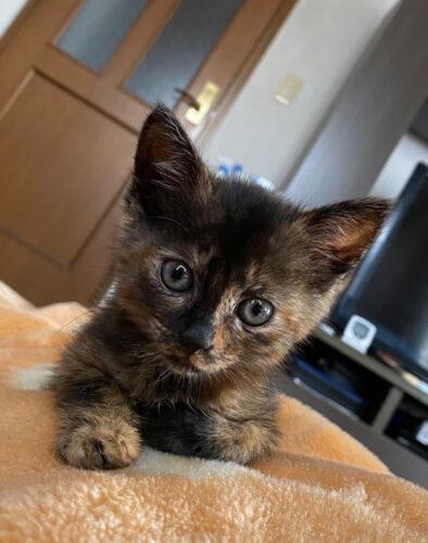 サビ猫ビワちゃんの里親さんが決定しました!