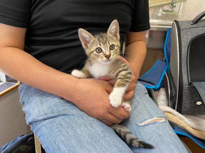 キジシロ猫トム君の里親さんが決定しました!
