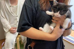 黒白猫ちーちゃんの里親さんが決定しました!