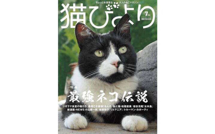 シェルターの猫が「猫びより」に掲載されました!