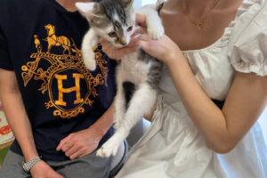 キジシロ猫おもち君の里親さんが決定しました!