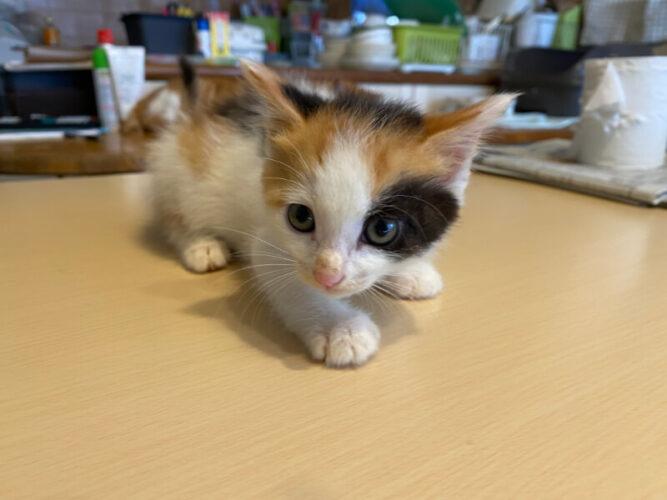 三毛子猫(メス):2021072301