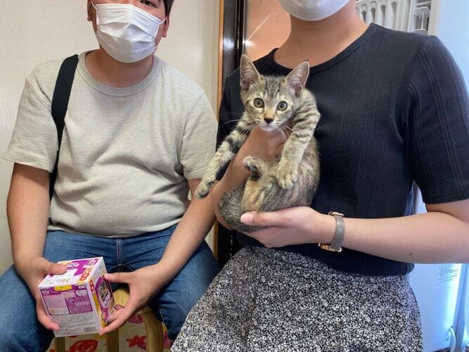 キジトラ猫スミレちゃんの里親さんが決定しました!