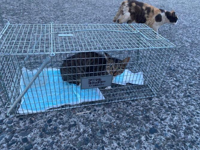 海岸に住む野良猫の去勢手術を行いました