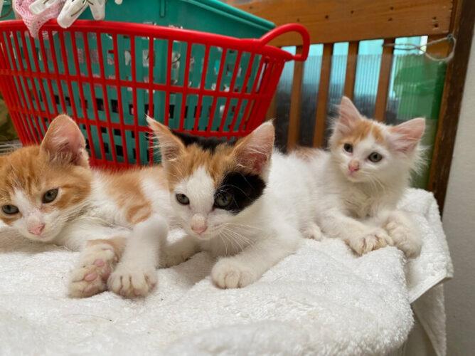 ミケ猫ナナちゃんと茶白猫ルルちゃんの里親さんが決定しました!