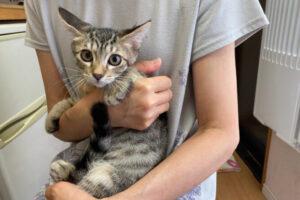 キジ猫ヤコちゃんの里親さんが決定しました!