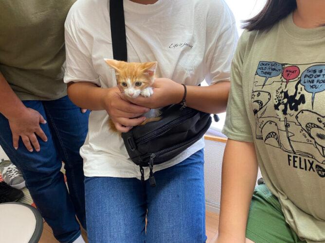 茶白猫チャオ君の里親さんが決定しました!