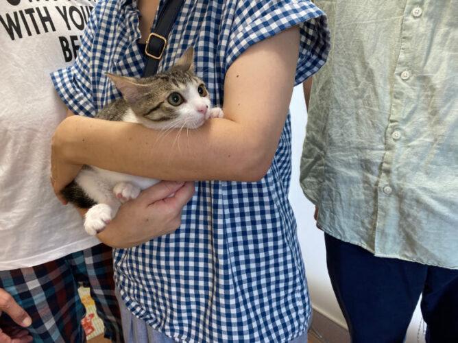 キジシロ猫きなこ君のトライアルが決定しました!