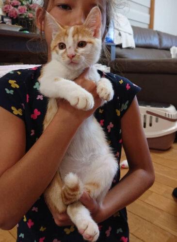 茶白子猫(オス):2021081112