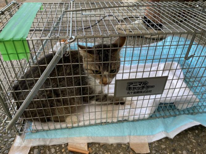 野良猫の避妊去勢手術(TNR)と子宮蓄膿症