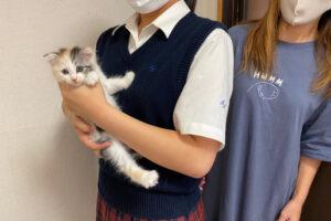 スコティッシュ系ミックス猫ヒメちゃんの里親さんが決定しました!