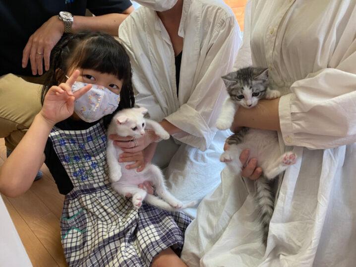 スコティッシュ系ミックス猫レン君とモコちゃんの里親さんが決定しました!