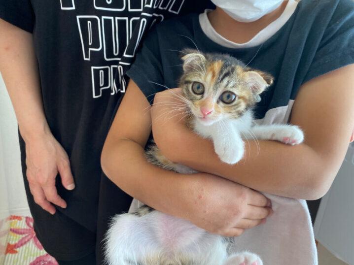 スコティッシュ系ミックス猫モナちゃんの里親さんが決定しました!