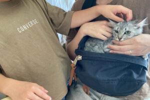 サバトラ猫ミウちゃんの里親さんが決定しました!