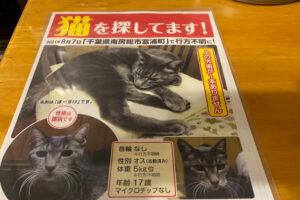 迷子猫のお知らせ:南房総市富浦町エリア灰トラ