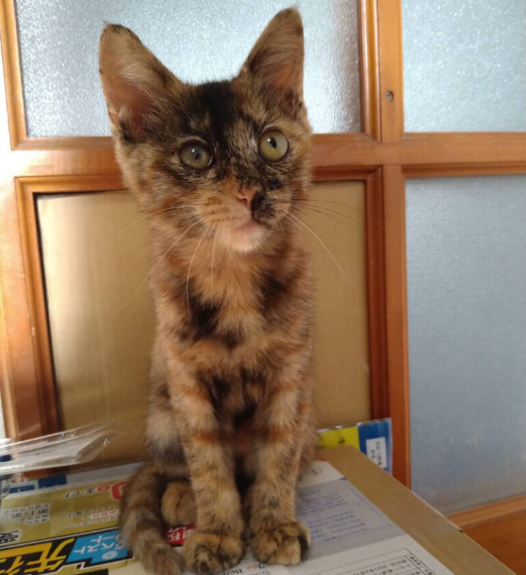 サビ子猫(メス):2021093001