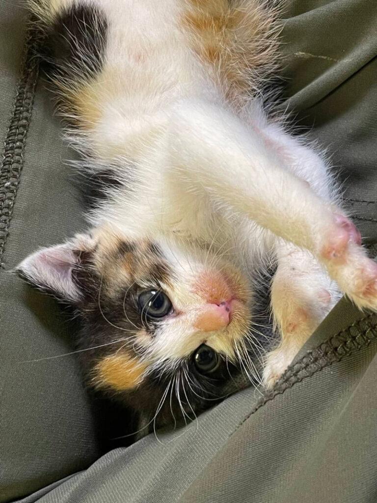 三毛子猫(メス):2021100601