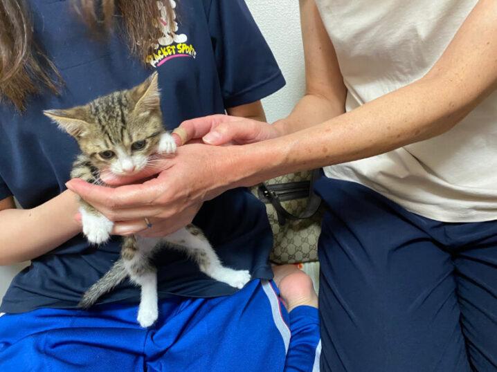 キジシロ猫カコちゃんの里親さんが決定しました!