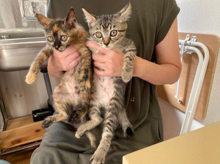 サビ猫サチちゃんとキジトラ猫マロン君の里親さんが決定しました!