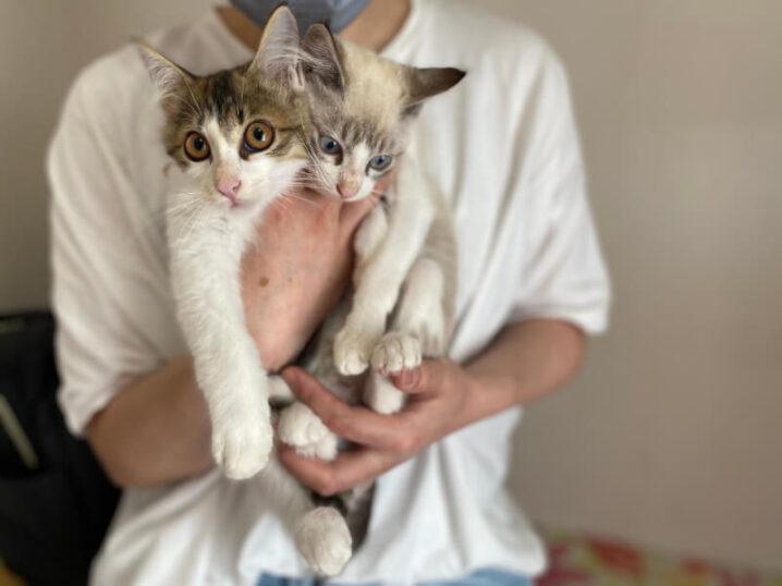 シャムミックス猫ソラ君とキジシロ猫ジュン君の里親さんが決定しました!