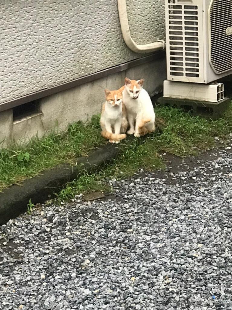 住宅街の猫の避妊手術(TNR)を行いました!