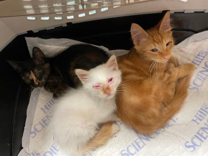 多頭飼いのお宅から6匹の子猫を保護しました!